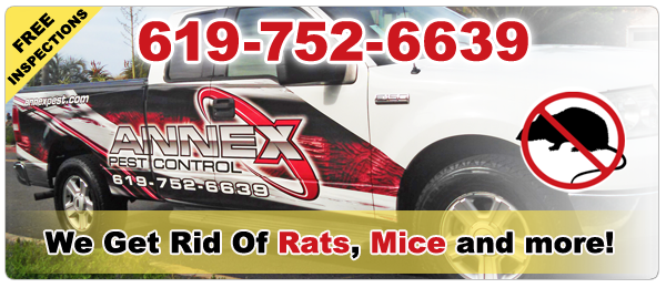 San Diego Rodent Control